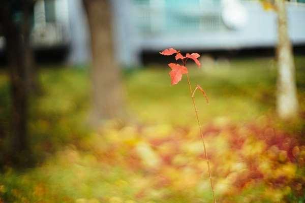 Najlepsze kwiatowe zapachy na jesień