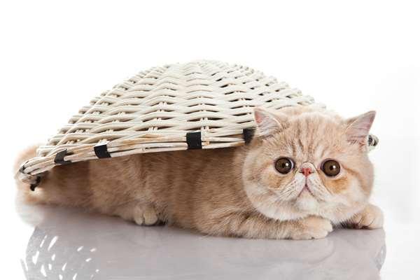 Specjalistycznie żywienie dla kotów